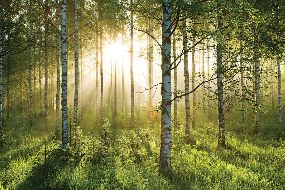 Relaxation: Tranquil Forest